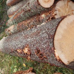 Sortimento di qualità nel bosco