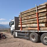Schleifholz für Papierproduktion