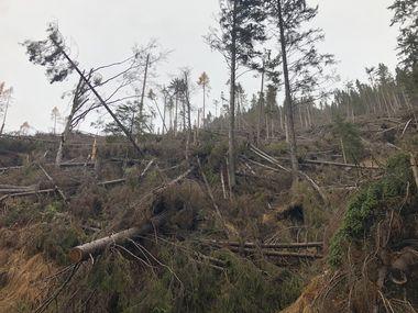 Unbewirtschafteter Wald